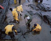 流れ出た石油の清掃 01809005079| 写真素材・ストックフォト・画像・イラスト素材|アマナイメージズ