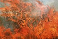 森林火災 01809011053| 写真素材・ストックフォト・画像・イラスト素材|アマナイメージズ