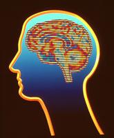 脳 01809011468  写真素材・ストックフォト・画像・イラスト素材 アマナイメージズ