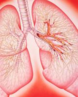 気管支炎 01809011616| 写真素材・ストックフォト・画像・イラスト素材|アマナイメージズ