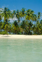 Tropical beach on Tobago  Caribbean