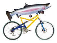 自転車に乗せた魚
