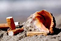 タバコの吸い差しとビーチの貝