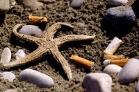 タバコの吸い差しとビーチのヒトデ