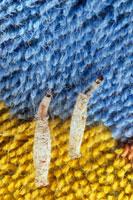 イガの幼虫 01809017463| 写真素材・ストックフォト・画像・イラスト素材|アマナイメージズ