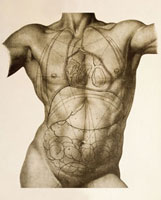 Positions of the internal organs