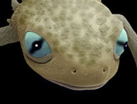 Head of a young newt,SEM