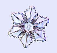 Snowflake,light micrograph 01809024423  写真素材・ストックフォト・画像・イラスト素材 アマナイメージズ