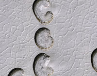 Ice cap erosion on Mars,satellite image