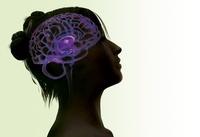 Woman's brain, artwork 01809027146| 写真素材・ストックフォト・画像・イラスト素材|アマナイメージズ