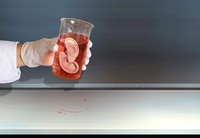 Organ production, conceptual image 01809027196| 写真素材・ストックフォト・画像・イラスト素材|アマナイメージズ