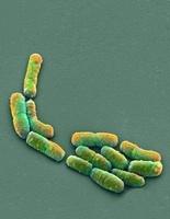 E. coli bacteria, SEM 01809027550| 写真素材・ストックフォト・画像・イラスト素材|アマナイメージズ