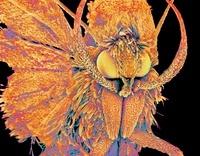 Moth, SEM 01809028419| 写真素材・ストックフォト・画像・イラスト素材|アマナイメージズ