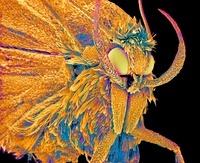 Moth, SEM