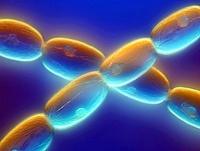 Stamen hairs, light micrograph 01809028819  写真素材・ストックフォト・画像・イラスト素材 アマナイメージズ