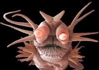 Deep ocean worm,SEM