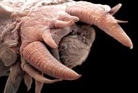Deep ocean worm,SEM 01809028840| 写真素材・ストックフォト・画像・イラスト素材|アマナイメージズ