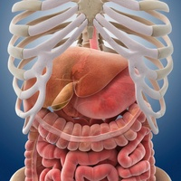 Digestive system, artwork