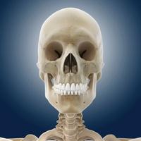 Human skull, artwork