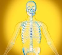Upper body, X-ray artwork 01809029330| 写真素材・ストックフォト・画像・イラスト素材|アマナイメージズ