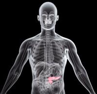 Human pancreas, X-ray artwork
