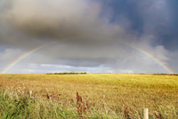 Rainbow across a field