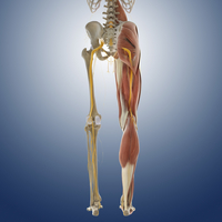 Lower body anatomy, artwork 01809030749| 写真素材・ストックフォト・画像・イラスト素材|アマナイメージズ