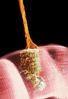 Synapse, SEM 01809030763| 写真素材・ストックフォト・画像・イラスト素材|アマナイメージズ