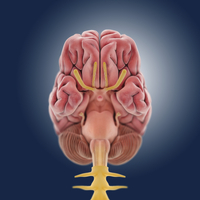 Central nervous system, artwork