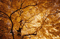 秋のセントラルパーク  NY アメリカ