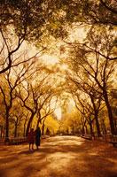 秋のセントラルパーク  NY アメリカ 01815001204| 写真素材・ストックフォト・画像・イラスト素材|アマナイメージズ