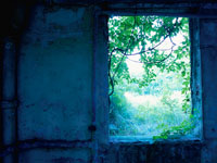 廃墟の剥がれたペンキの壁と窓とつる草