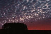 うろこ雲と木々   北海道