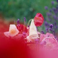 ラベンダーとポピーの花と丘の妖精人形のアップ フォトイラスト