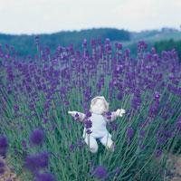 ラベンダーの花と丘の妖精人形のアップ フォトイラスト 美瑛