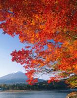 河口湖畔の紅葉と富士山  山梨県 01840005975| 写真素材・ストックフォト・画像・イラスト素材|アマナイメージズ