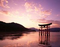 夕焼けの大鳥居 広島県 01881034259| 写真素材・ストックフォト・画像・イラスト素材|アマナイメージズ