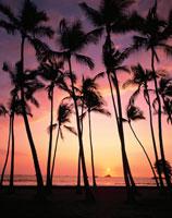夕焼けの海とヤシの木のシルエット