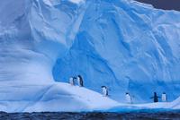 アイスブルグとジェンツーペンギン