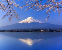 河口湖畔の桜と富士山 逆さ富士