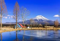 ふもとっぱらから望む富士山 氷結する池