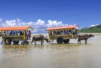 水牛車 01888613485| 写真素材・ストックフォト・画像・イラスト素材|アマナイメージズ