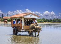水牛車 01888613509| 写真素材・ストックフォト・画像・イラスト素材|アマナイメージズ