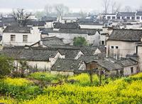 宏村の家並みと菜の花畑