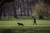 ハイドパーク公園を散歩する男性と犬  ロンドン イギリス