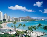 ヤシの木とワイキキビーチ   ハワイ