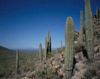 サボテンとツーソンマウントパーク アリゾナ アメリカ