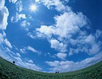 ジャガイモ畑と雲    美瑛町 北海道