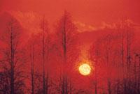木立と太陽