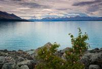 バラとプカキ湖と雲に覆われ始めたマウントクック 01984026333| 写真素材・ストックフォト・画像・イラスト素材|アマナイメージズ